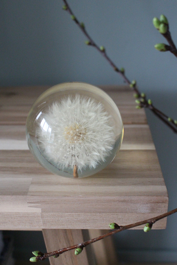 photography - Dandelion presse papier - Sandra Meier - Accessorize your Home