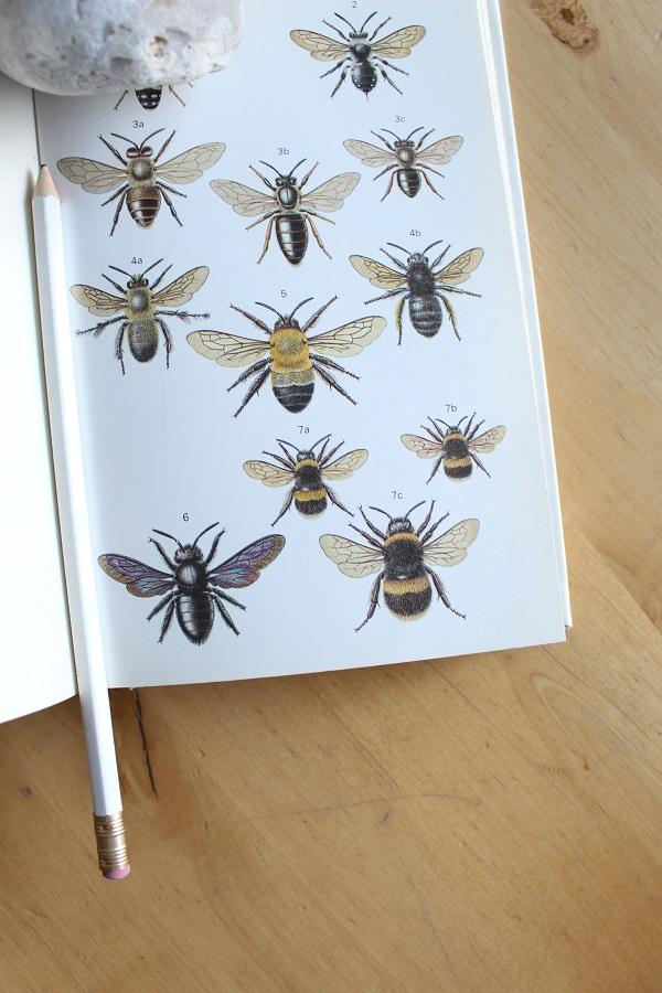 Elsevier boekje vol gekleurde tekeningen van insecten - via Accessorize your Home