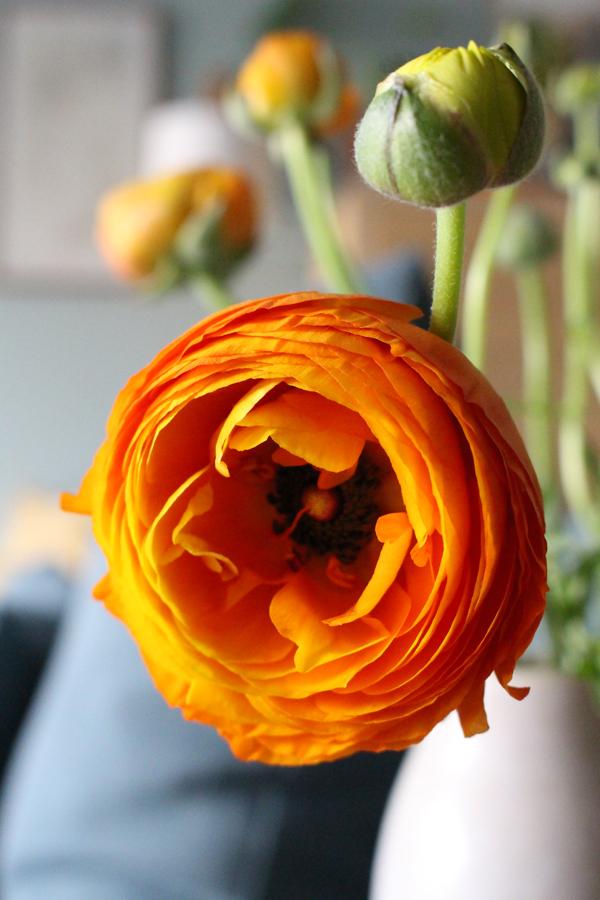 Diep oranje ranonkel in volle bloei in handgemaakte keramieken vaas - via Accessorize your Home